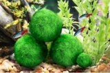 Luffy Pets Collection Marimo Moss Balls